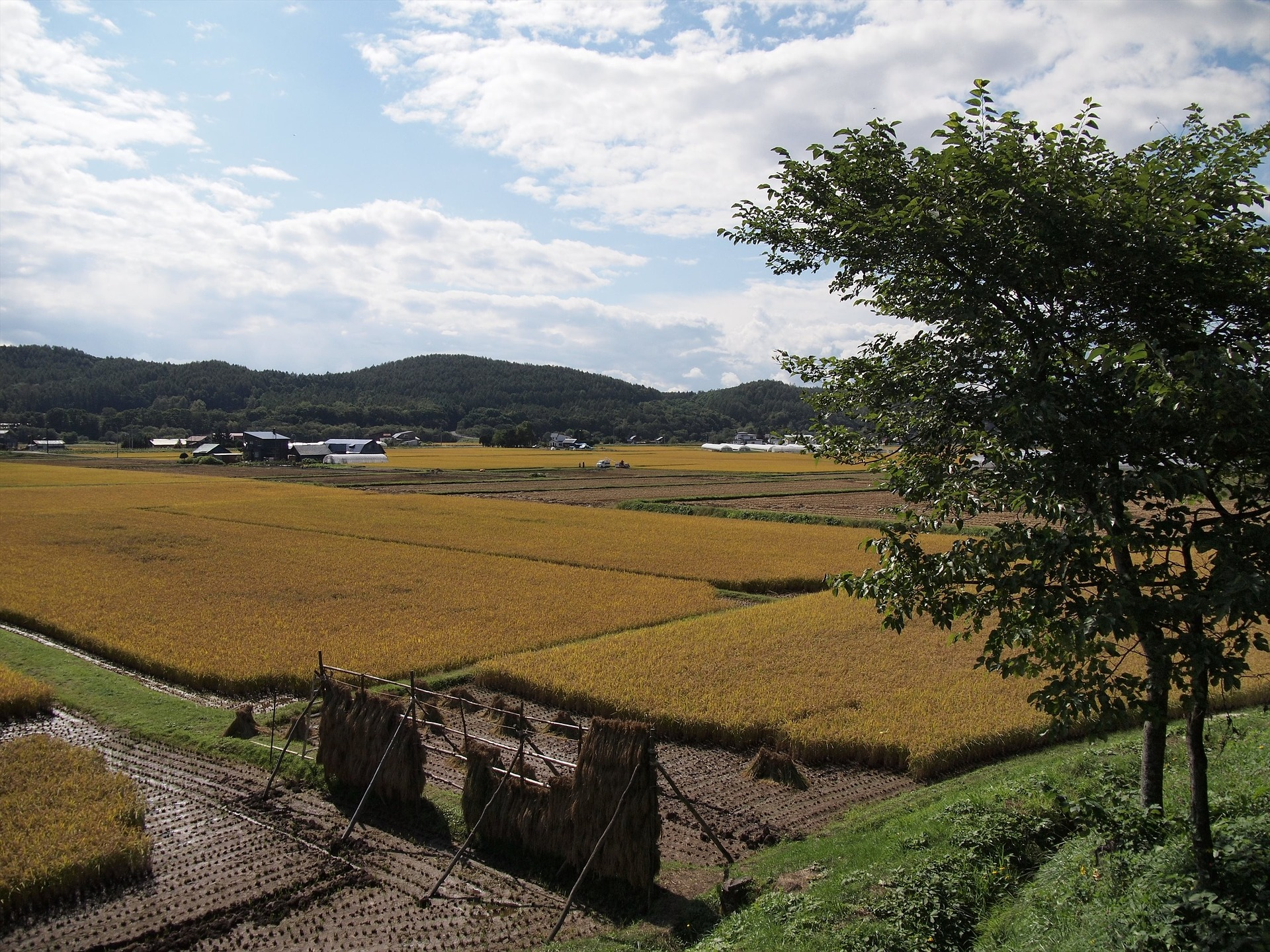 yamadas-rice-fields-978738_1920