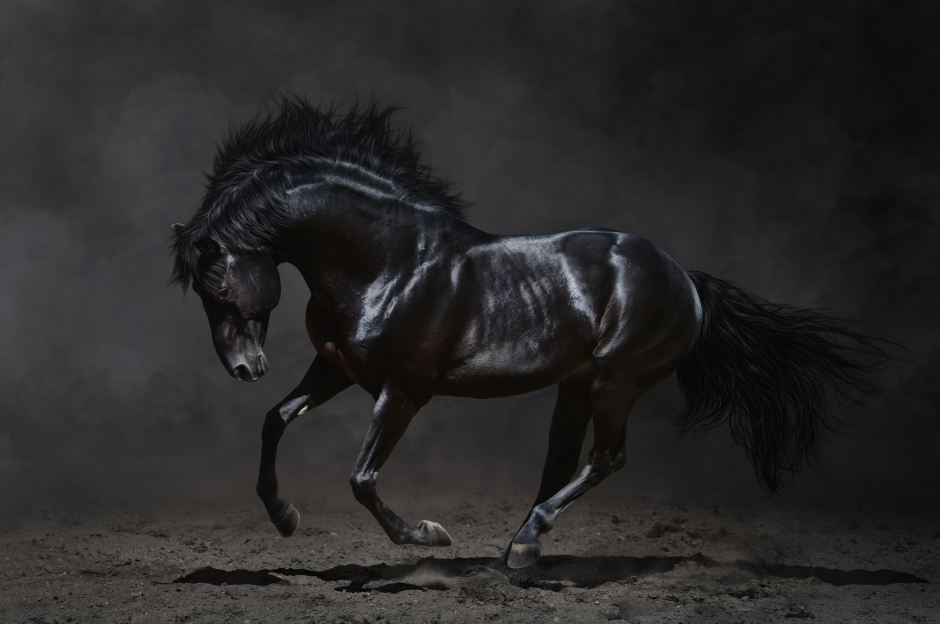 Low-key photography of galloping black horse
